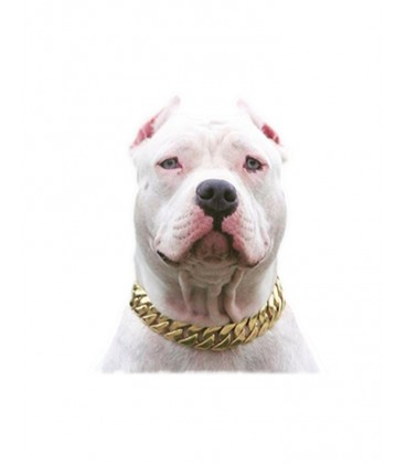Looks Great on Pit Bulls!